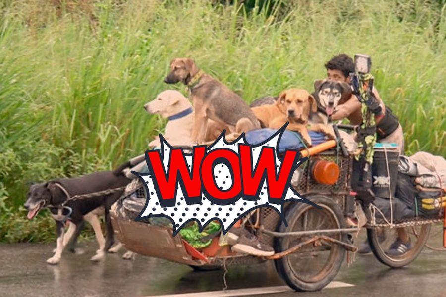 "<p>Фото © <a href=""https://www.boredpanda.com/edgardo-perros-rescues-dogs-on-road-mexico-stuart-williams/"" target=""_blank"" rel=""noopener noreferrer"">Bored Panda</a></p>"
