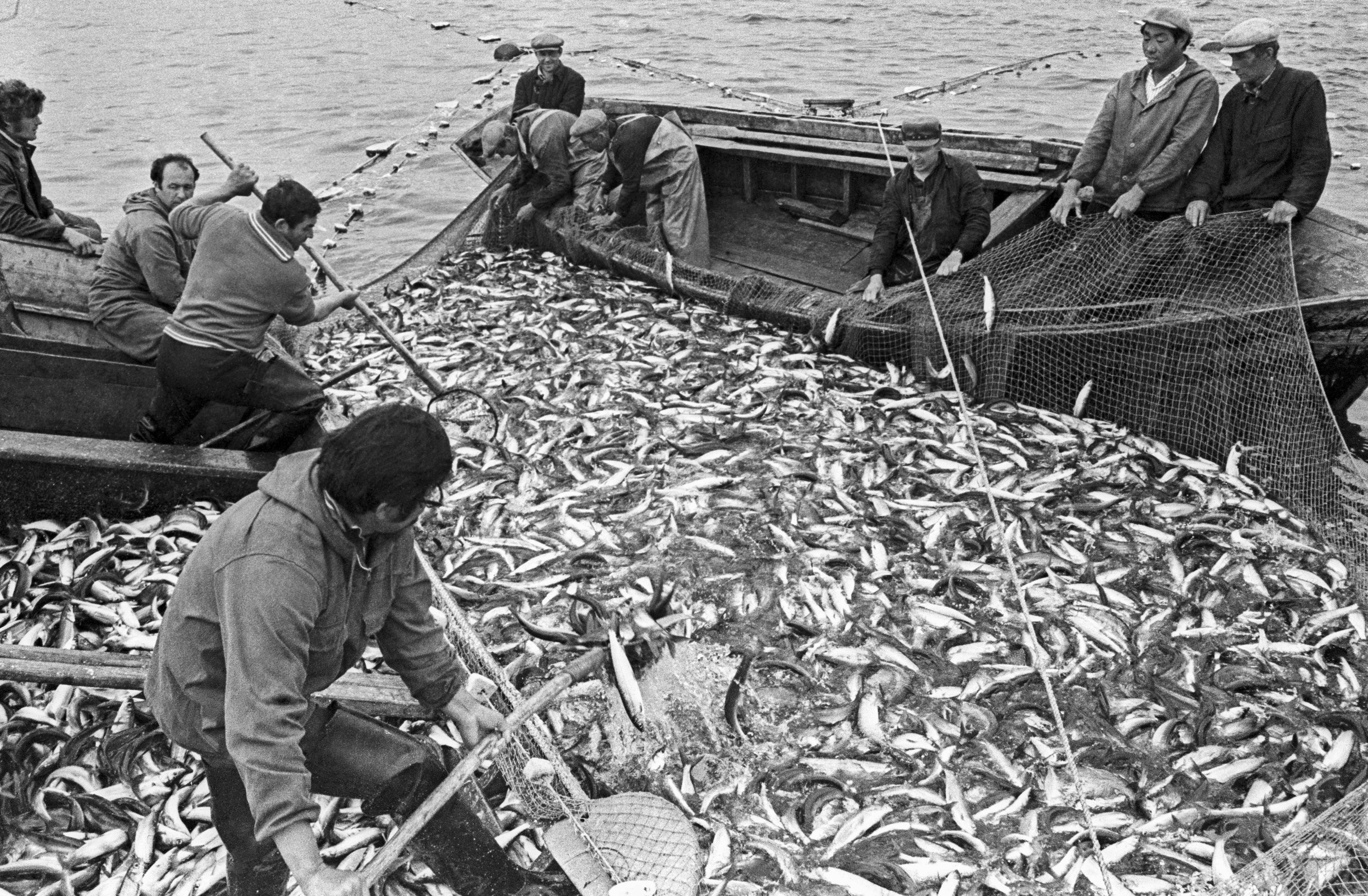 Рыбу здесь ловили многие десятилетия. Фото © ТАСС / Эдгар Брюханенко