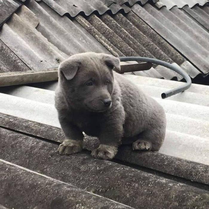 Фото © Facebook / Gấu Mèo Bắc Mỹ