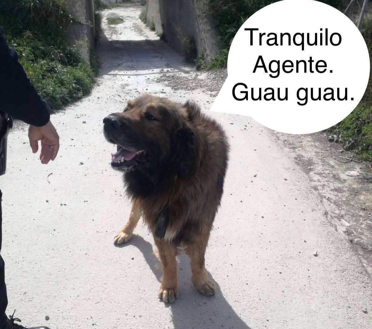 """Надпись: """"Секретный агент. Гав-гав"""". Фото © Twitter / MolinaPolicia"""
