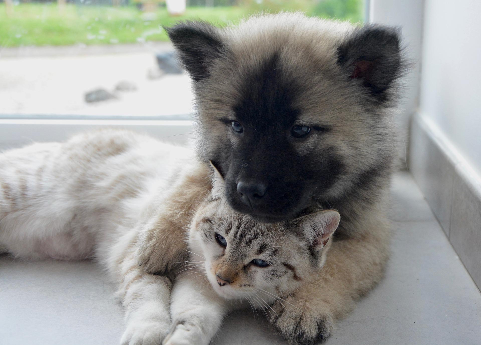 dog cat 2904616 1920 1585726432507