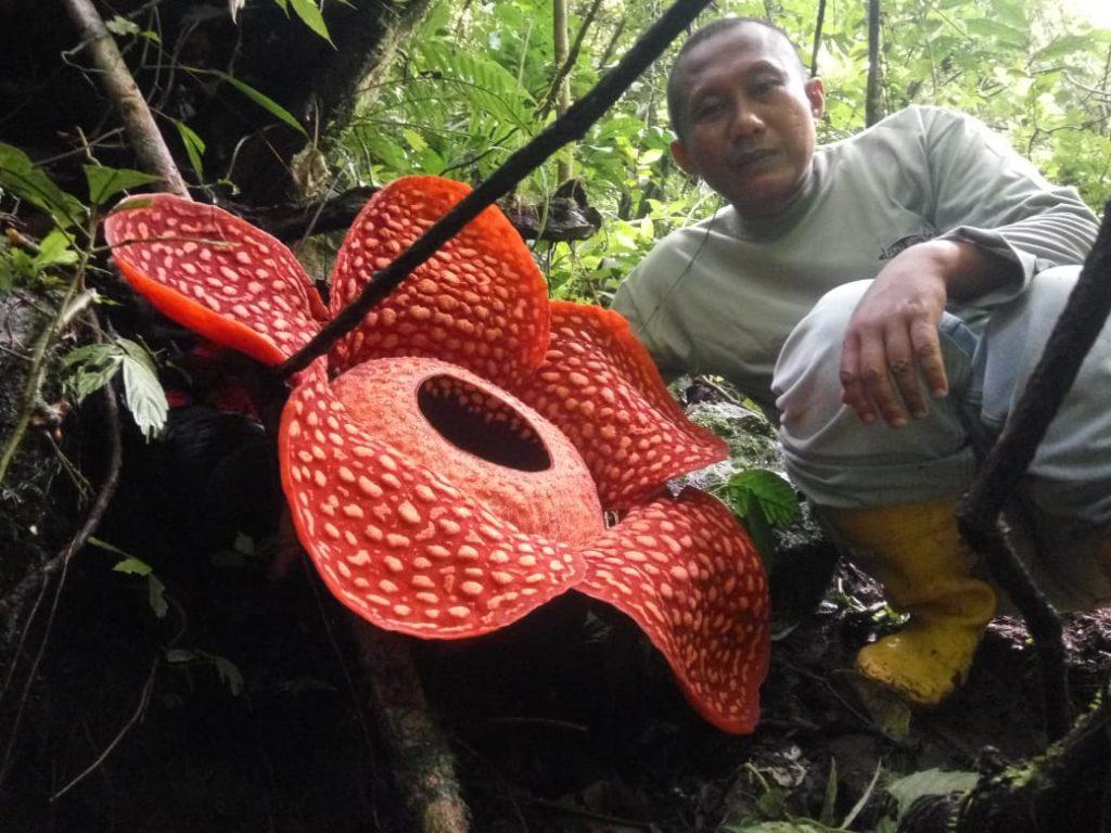 Фото © Центр охраны природных ресурсов Западной Суматры