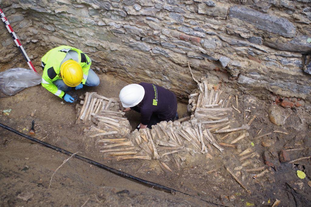 Стены, построенные из человеческих костей, нашли у основания храма в Бельгии