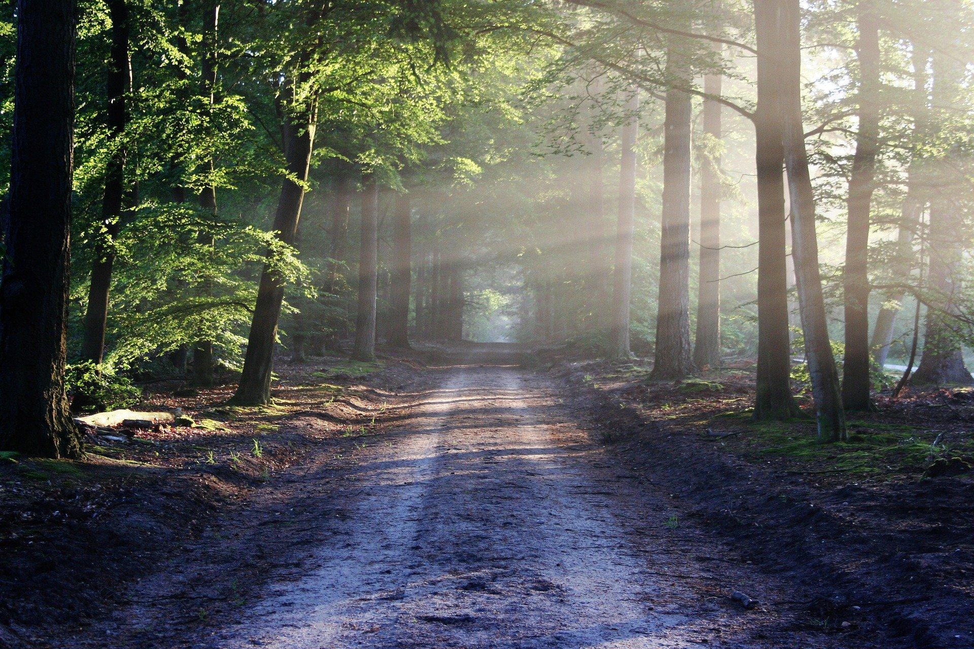 the-road-815297_1920-1588234290457.jpg